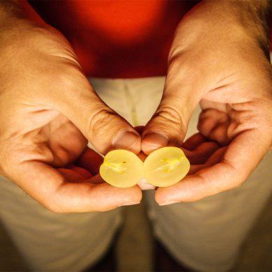 Luisa, l'uva a bacca gialla tutta italiana