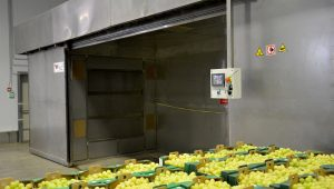 forno per confezionamento uva fra.va.