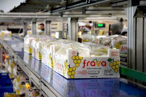 confezioni uva fra.va. in produzione