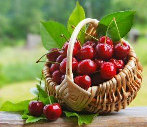 ciliegie raccolte cesta