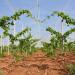 Qualità e competitività: nuove tecniche di coltivazione