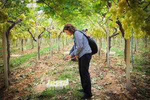 visitatrice dell'ottavo simposio internazionale dell'uva da tavola fotografa cassetta di uva
