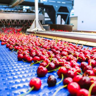 Un nuovo sistema InVision Total View per la calibratura delle ciliegie