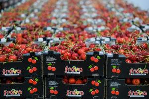 casse ciliegie Frava